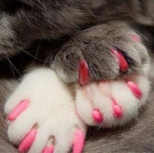 动物指甲图片简单